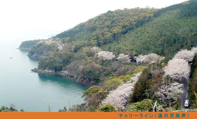 水俣市チェリーライン(桜街道)・九州の花と紅葉